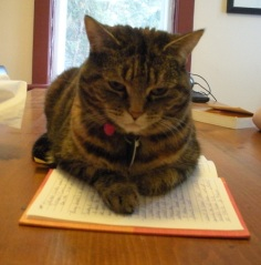 cat on journal