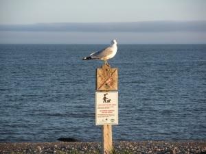 maritime bird