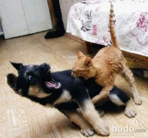 These are not my pets. (My cats and dog love each other.) I found this one online and would credit the photographer if I could find out her name.