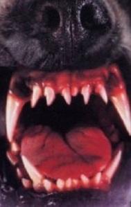 dog snout open