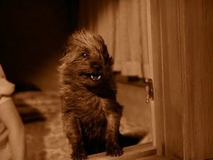Get inside, Toto. Storm's a'comin.