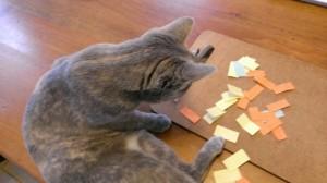 cat_contest
