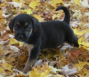 My dog Ernest as a puppy